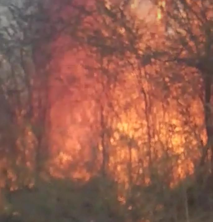 जंगल में लगी आग पर समय रहते पाया काबू